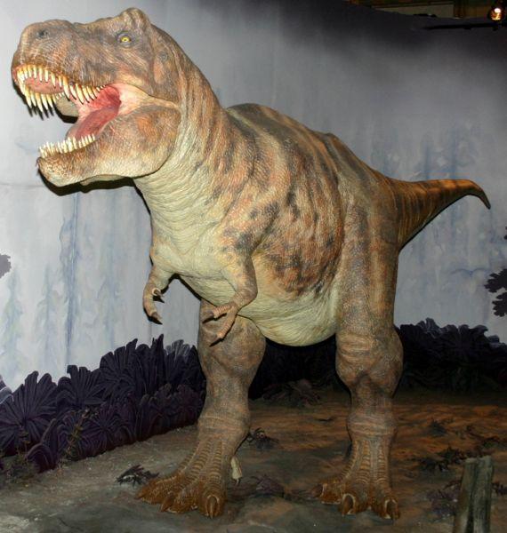 Comparing Tyrannosaurus Rex and Raptor