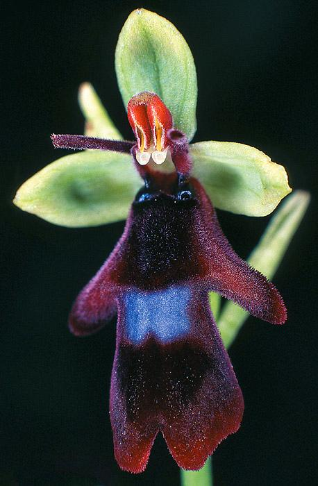orchideen aufsatzsammlung sparkling science. Black Bedroom Furniture Sets. Home Design Ideas