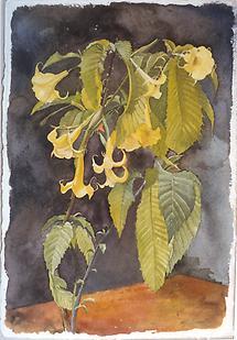 Blumenstilleben Dattura