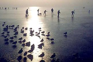 Eisläufer auf dem Neusiedler See