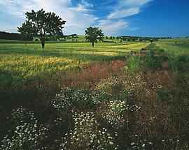 Landschaft bei Neusiedl am See