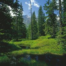 Rauris - Nationalpark Hohe Tauern - Urwaldgebiet