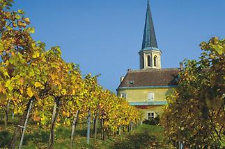 Gumpoldskirchen, Weingärten