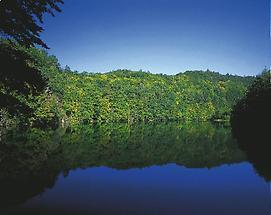 Teich bei Hardegg (Nationalpark Thayatal)