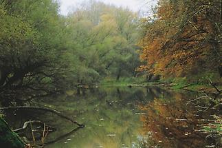 March- Auen bei Marchegg, Nationalpark Donau Auen
