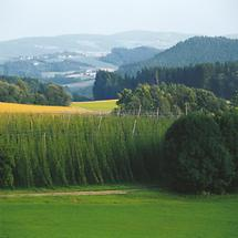 Gallneukirchen - Hopfenanbau