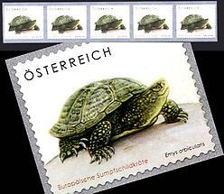 Tierschutz - Schildkröte