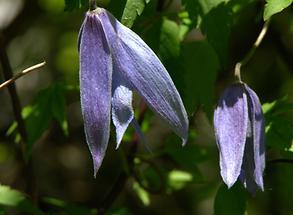 Blüten, Detail