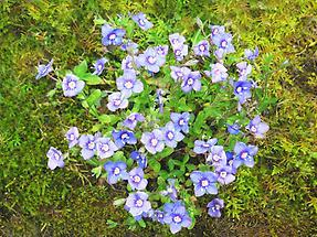 Blüten von oben