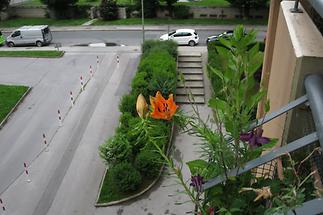 Pflanze am Balkon