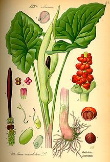 Bild nach Thomé