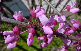 Blüten (2)