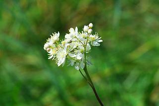 Blüte, Detail