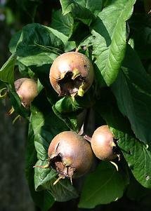 Früchte (1)