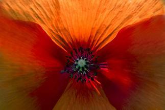 Blüte Nahaufnahme