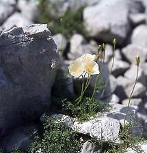 Pflanze zwischen Steinen