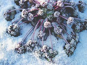 Blätter im Winter (2)