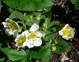 Blüten (1)