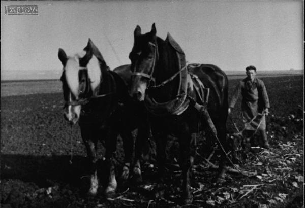 Landwirtschaft arbeit und beruf bildthemen bilder bücher