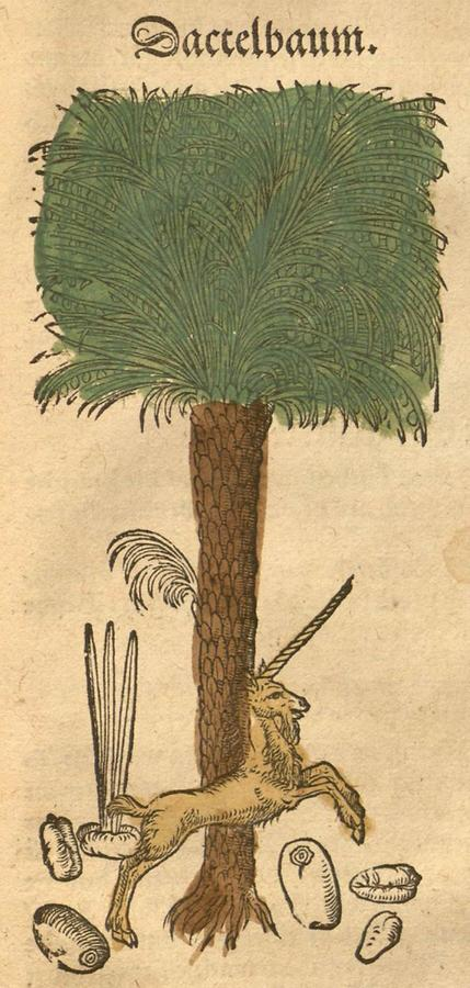 Illustration Dactelbaum