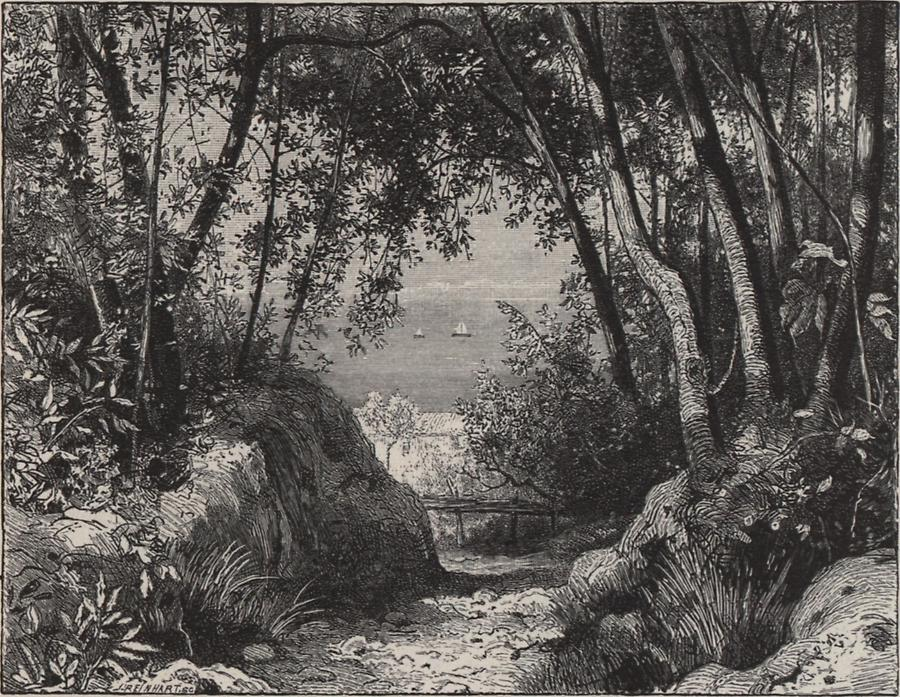 Illustration Lorbeerwald bei Abazzia
