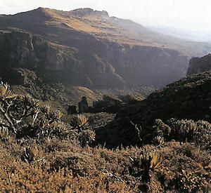 Der Mount Elgon