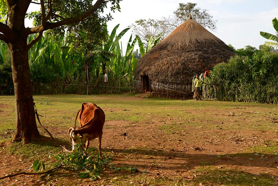 Sidama People - Hut