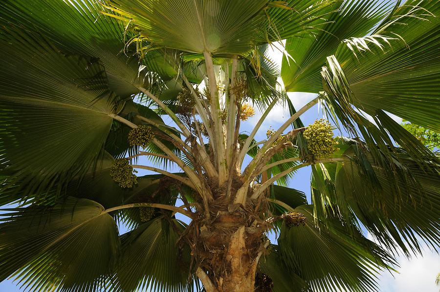 La Digue Veuve Reserve - Palm Tree