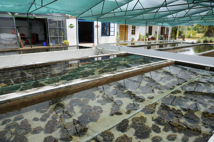 Giant Clam Farm