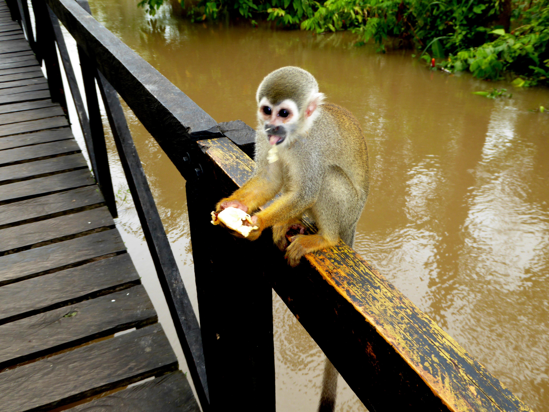 Isla De Los Micos 3 Amazon River Pictures Geography Im