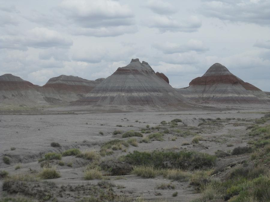 Petrified Forest Painted Desert National Park