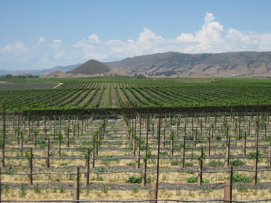 San Luis Obispo Edna Valley Vineyard