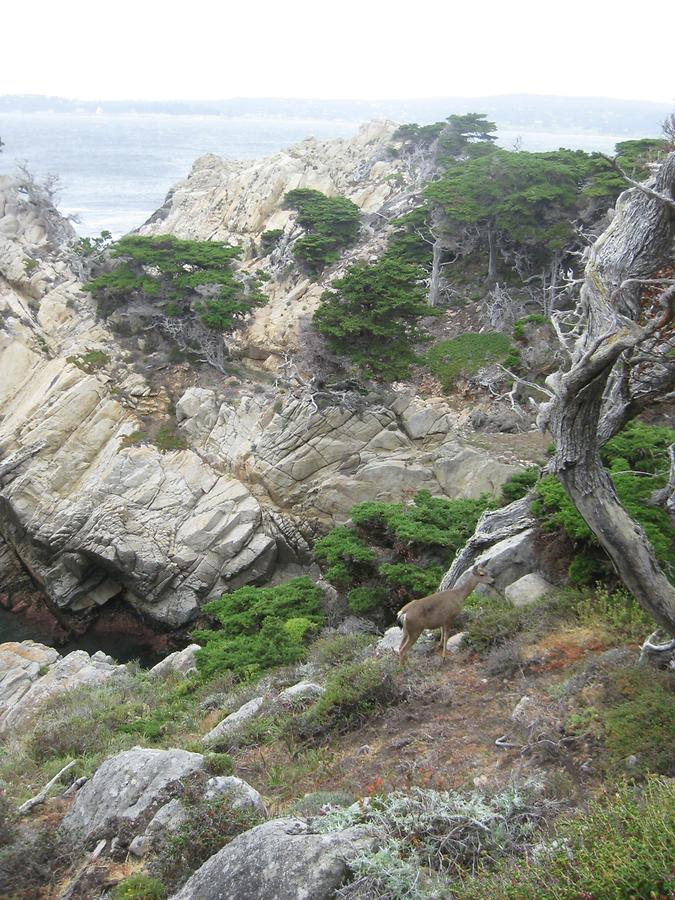 Big Sur Point Lobos