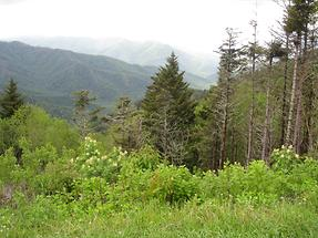 Great Smoky Mountains (1)