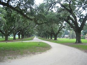 Mt. Pleasant Boone Hall Plantation (6)
