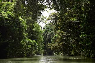 Jungle River (1)