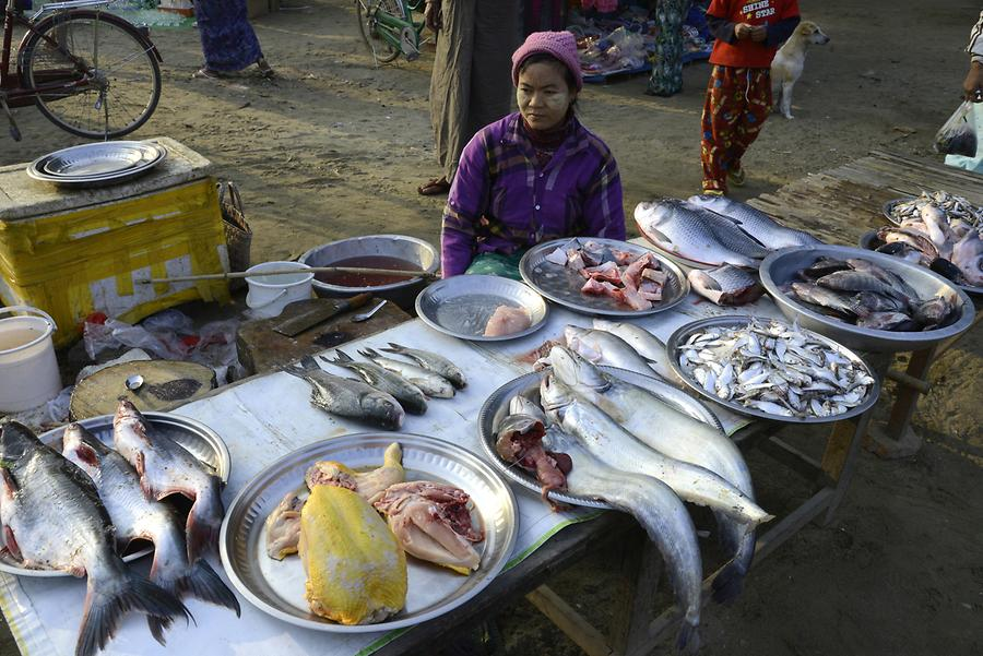 Fish Weekly Market Sagaing