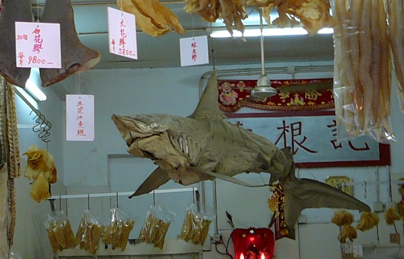 dried shark hanging from the ceiling