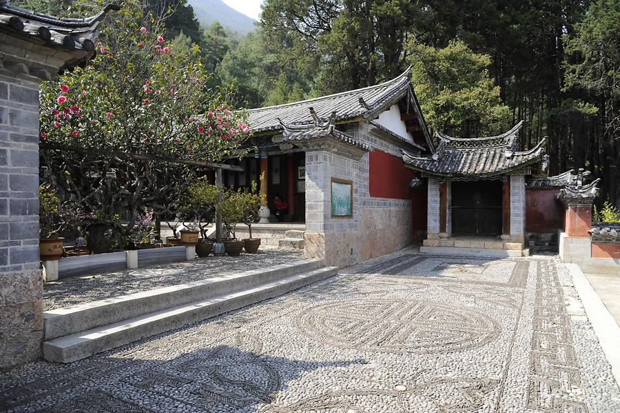 Yufeng Si Temple - Camellia