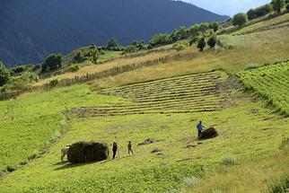Agriculture in Svaneti