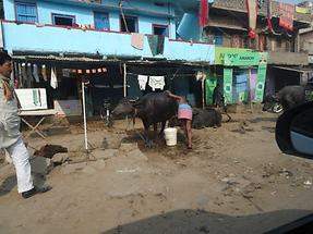 Village Life Near Gaya (1)