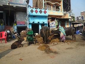 Village Life Near Gaya (2)
