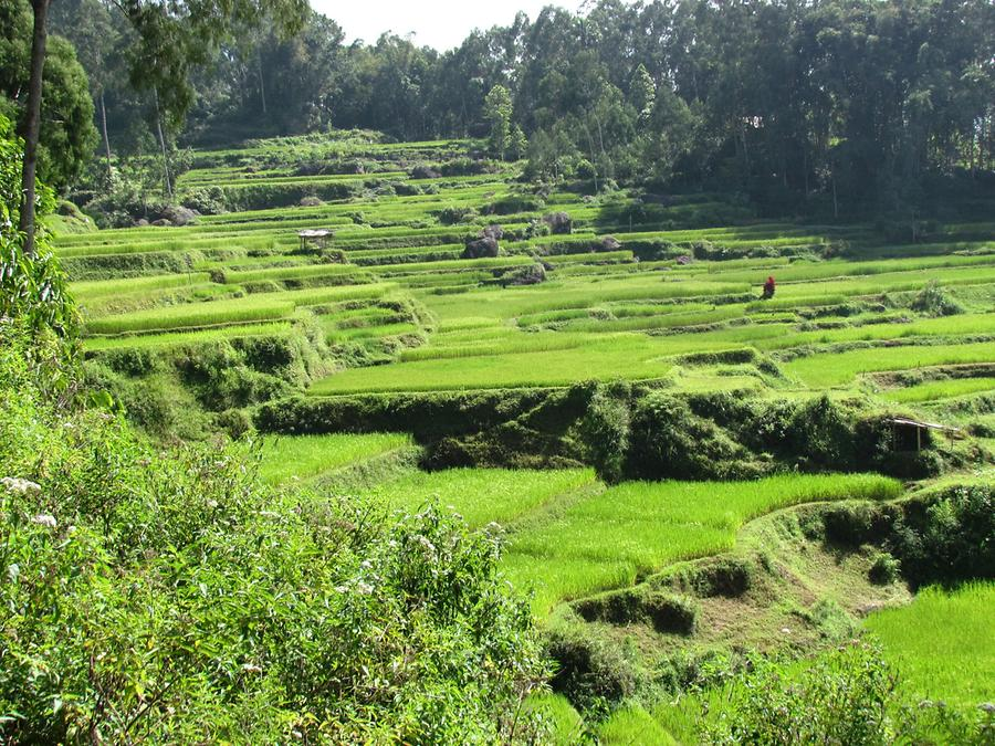 Karstic Highland with Paddy Fields