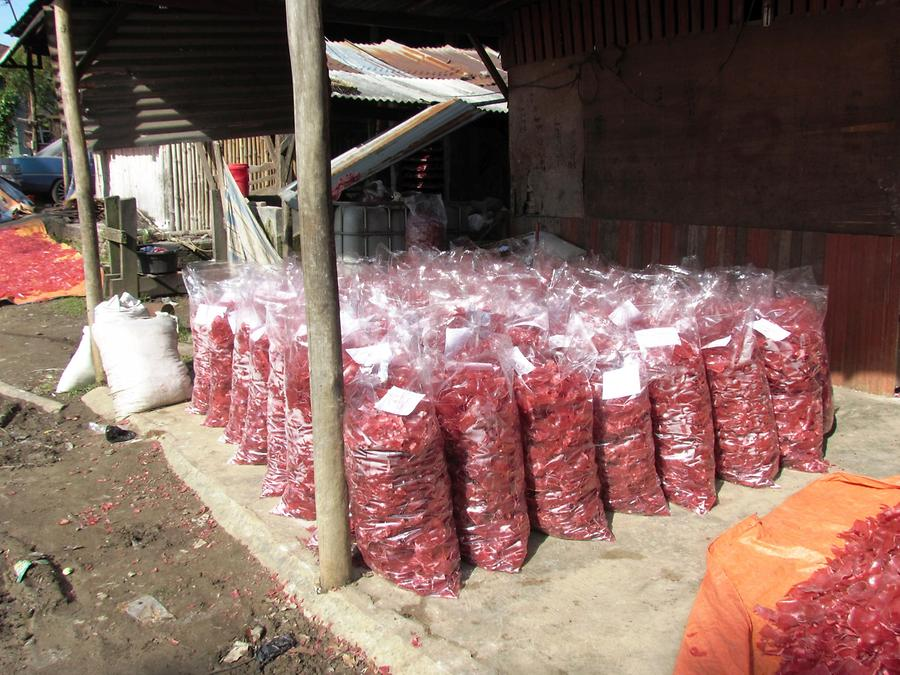 Manioc Chips Production