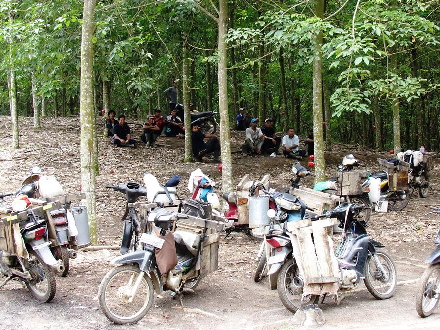 Workers in the Rubber Plantation