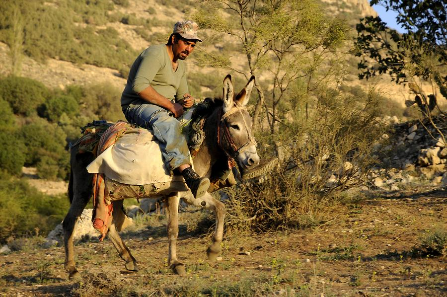 Man riding a donkey