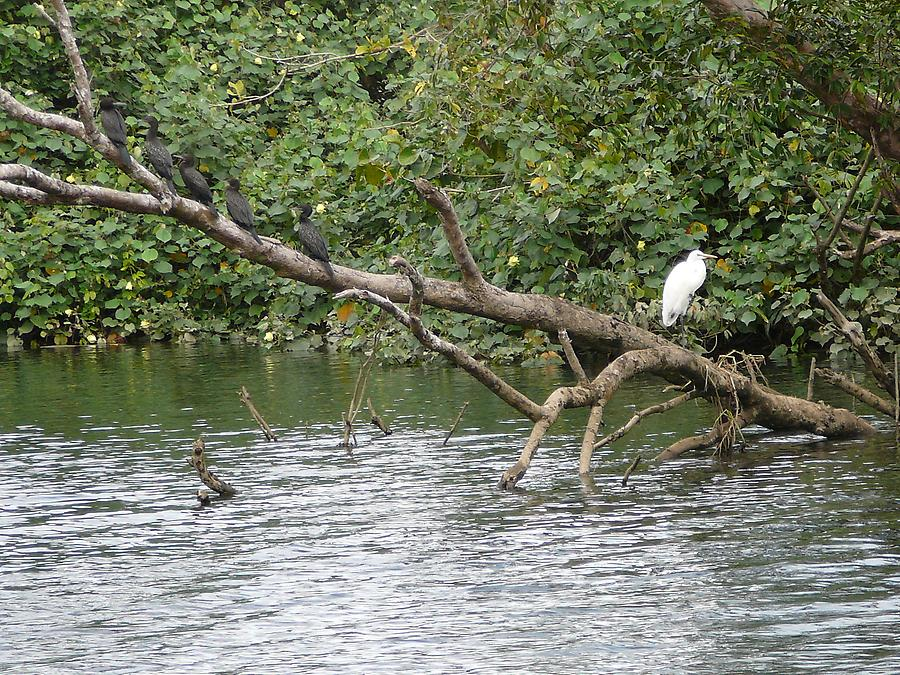 On Daintree river