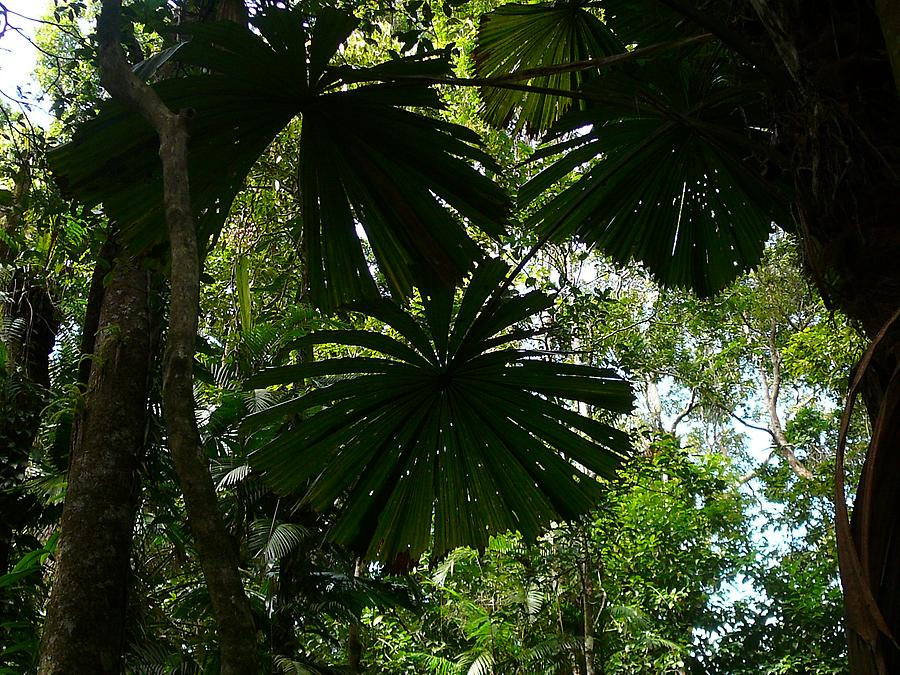 Daintree rain forest, Photo: H. Maurer, 2007