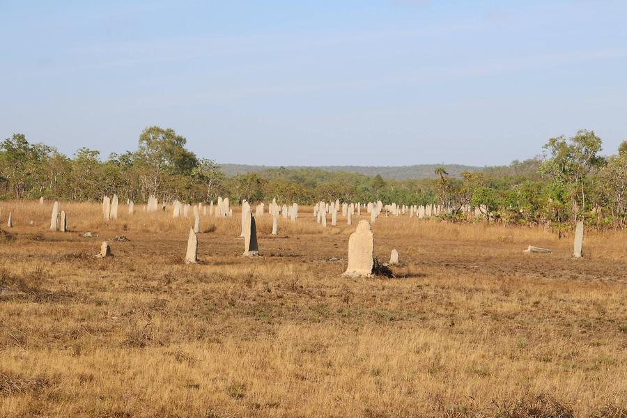 Termite mounds near Darwin