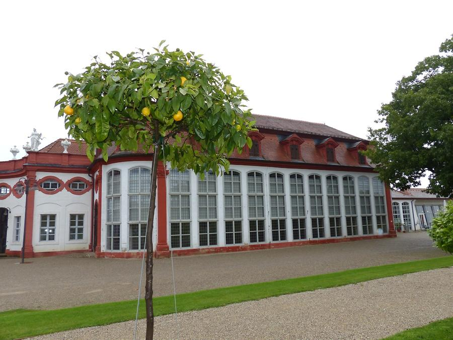 Castle Seehof - Orangery with orange trees